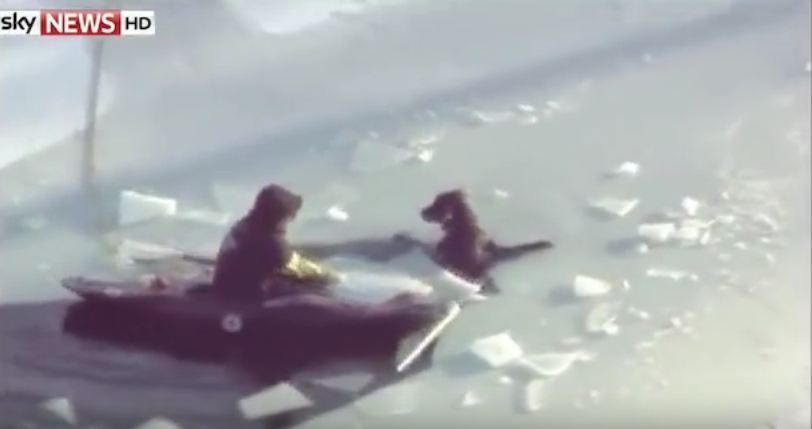 A Dog's Owner Went To Save Her From Freezing Water…Then The Unthinkable Happened