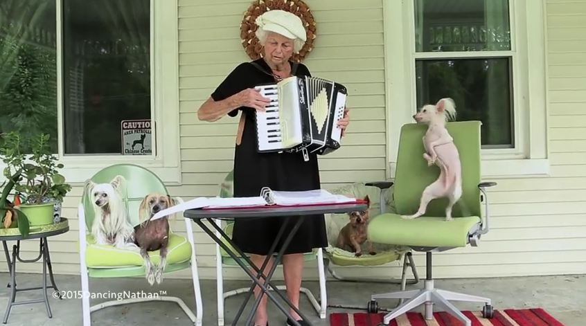 Dog Does The Funniest Thing When His Owner Plays The Accordion