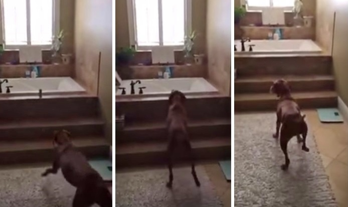 This Dog Who Just Stole Something Is Not As Sneaky As He Thinks!