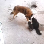 What This Dog Did When She Met A Bunch Of Kittens Is Too Perfect For Words