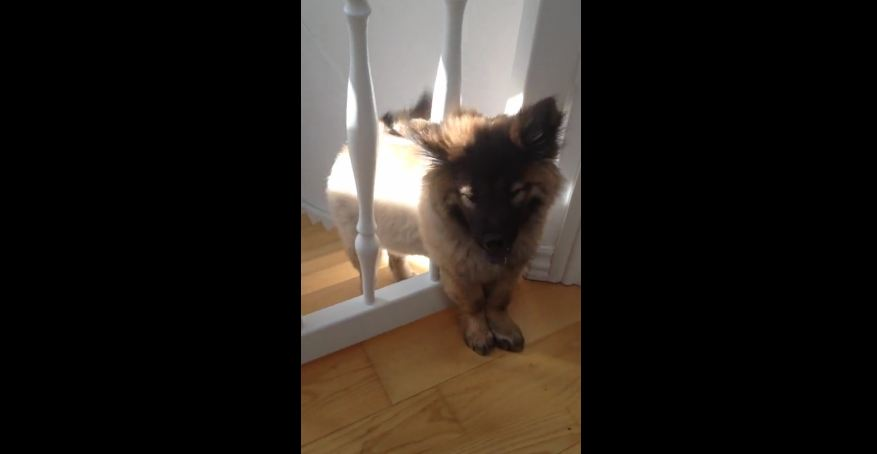 Dog realizes she's no longer a puppy