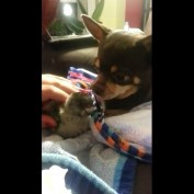 Adorable friendship between dog and baby parrot