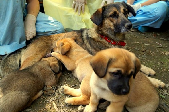 Mama and Puppies Buried Alive Saved in the Nick of Time