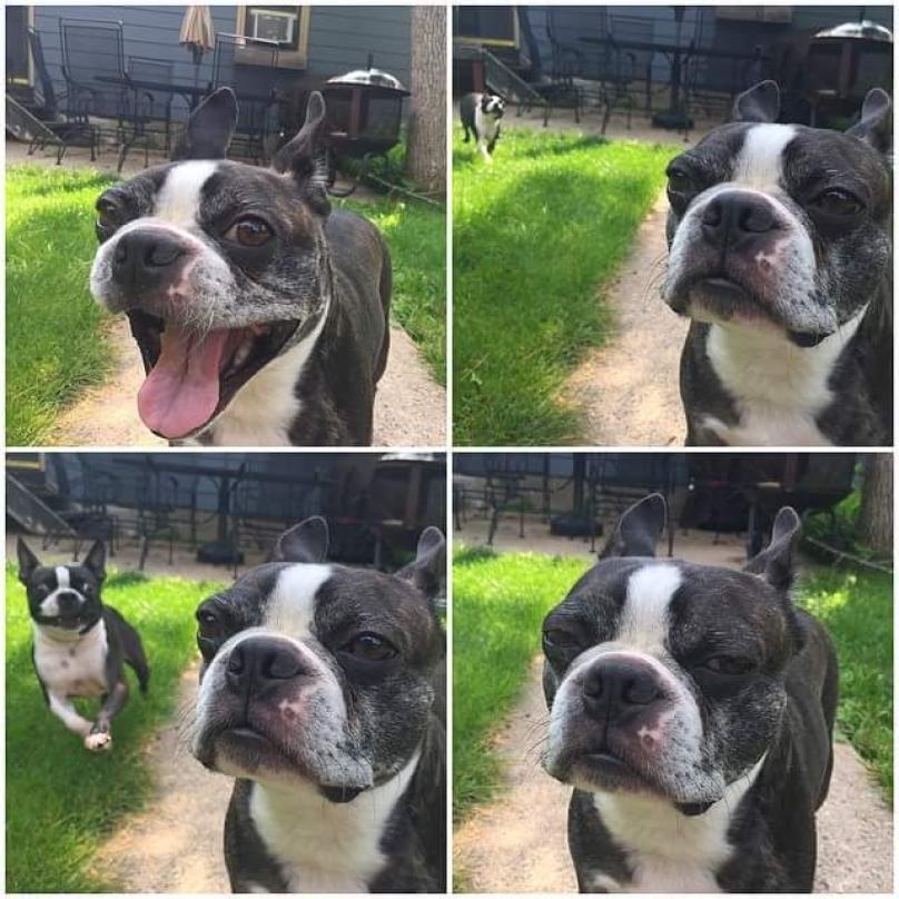 funnydogpics15-29-808x808