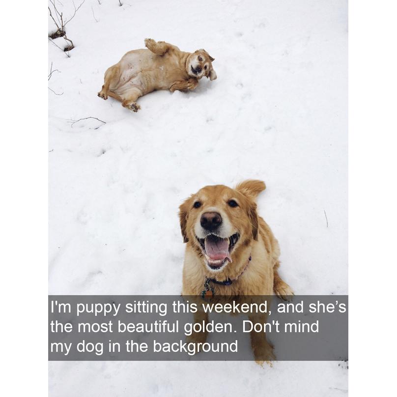 funnydogpics15-32-808x808