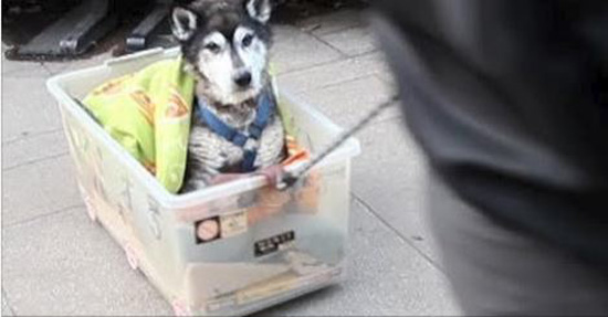 Man's Devotion To His Ailing Senior Dog Is So Beautiful It'll Move You To Tears