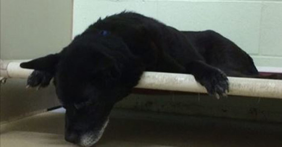 Senior Dog Ditched By Owner After 14 Years Of Friendship. 2 Hours Later, The Biggest Shocker Happens!