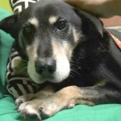 An Amazing Rescue Transforms An Abandoned Senior Dog's Future