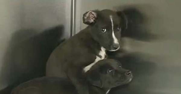 Two Puppies Found Sealed Inside Of An Aquarium Make It Out Alive