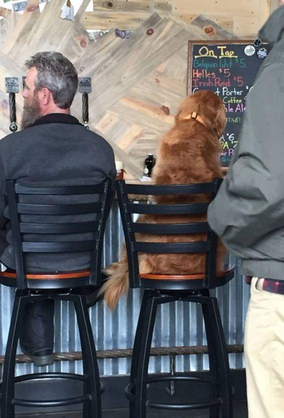 01-Dog-Friendly