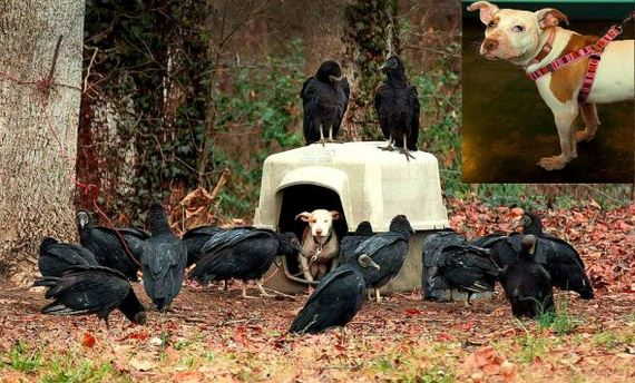 How Vultures – the Harbingers of Death – Brought Life to an Unloved Dog