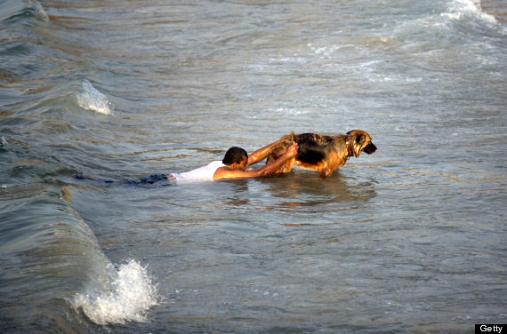 Palestinian Man Teaches Dogs to Rescue Shipwrecked People