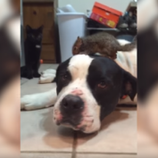 Dog Doesn't Want Cat Messing with His New Squirrel Friend