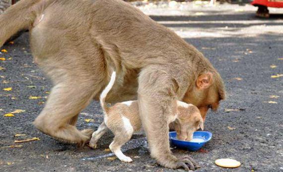03-monkey-adopts-puppy