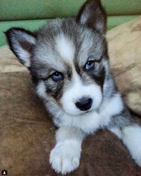 03-Rescued- Husky