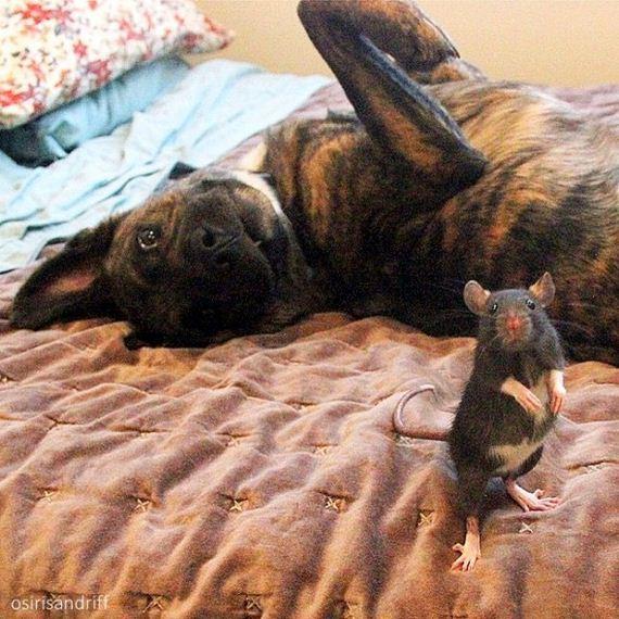 04-Dog-and-Rat