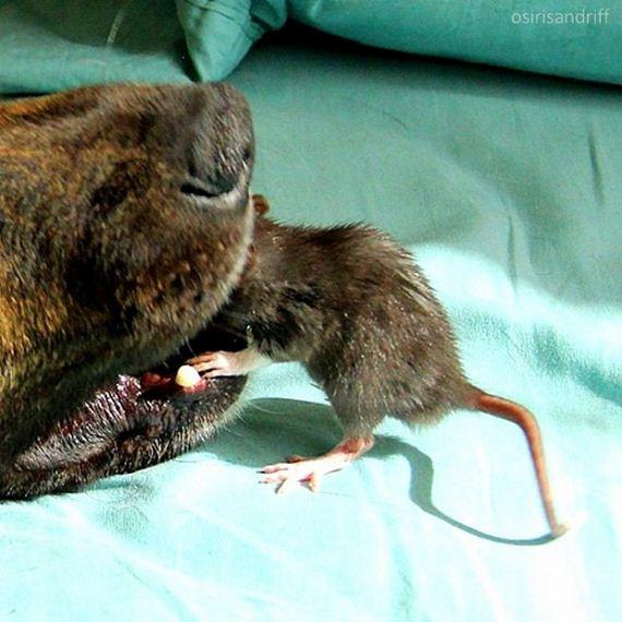 05-Dog-and-Rat