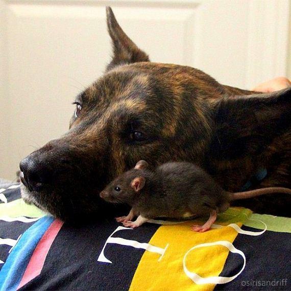 07-Dog-and-Rat