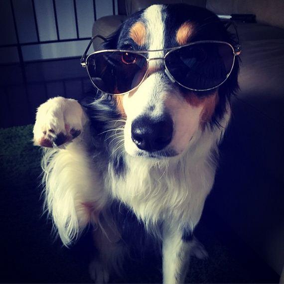 08-Dog-Friendly