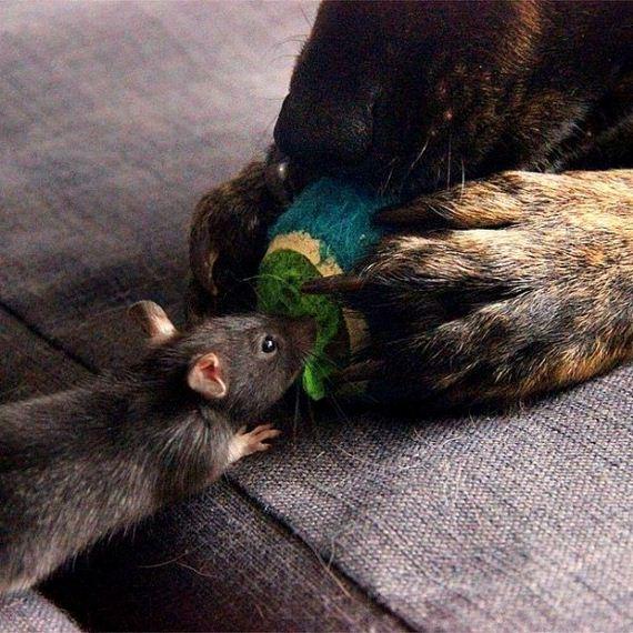 09-Dog-and-Rat