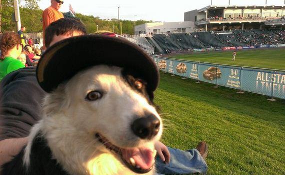 09-Dog-Friendly