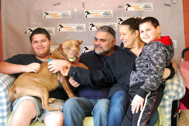 Pit Bull That Spent Five Years in Shelter Finally Gets Adopted