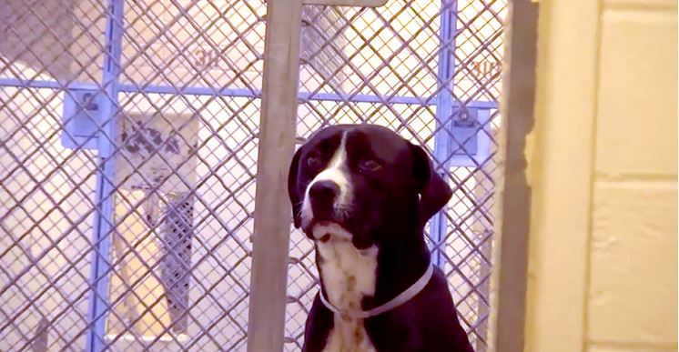 A Scared Shelter Dog Has No Idea He's About To Have The Best Day EVER!
