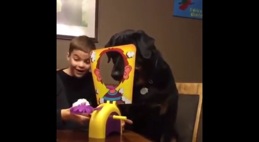 Dog Loves Playing Pie Face