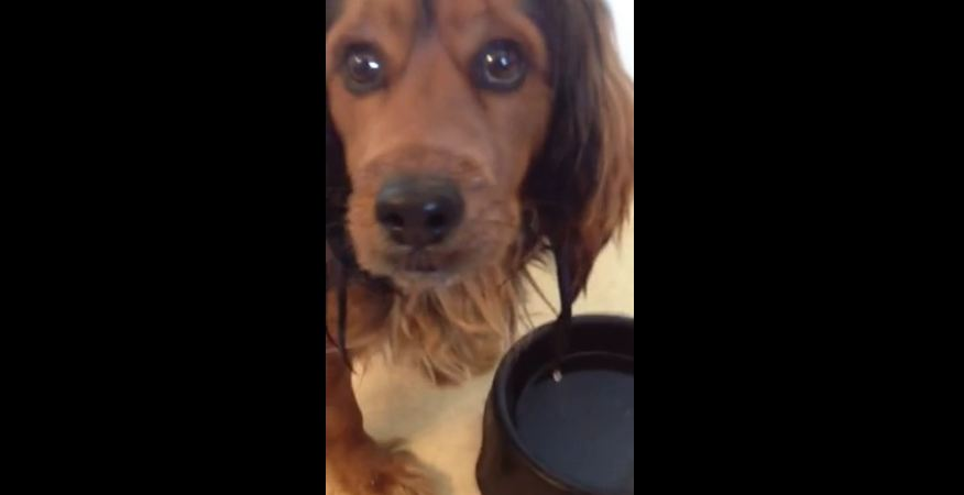 The way this dog drinks water will crack you up!