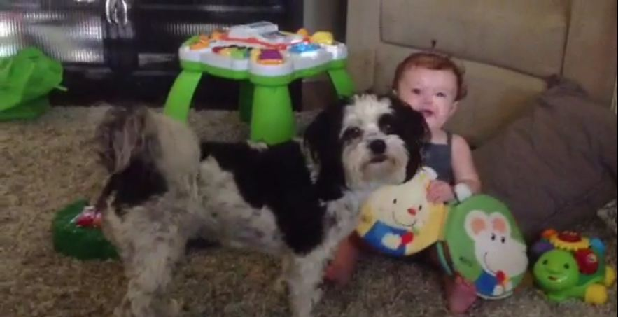 Dog teaches baby how to play the xylophone