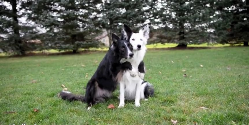 Dogs flawlessly pose for heart-melting photo session