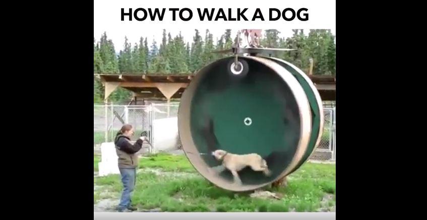 Man Builds Dog-Sized Hamster Wheel