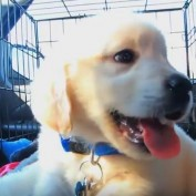 This Cute Time-Lapse Video Of A Puppy's First Year Is A Must-See For All Dog Lovers