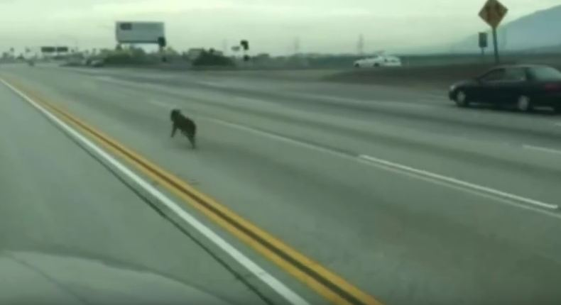 This Highway Rescue Of Two Dogs Will Have You On The Edge Of Your Seat!