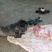 Puppy looks over newborn baby sister