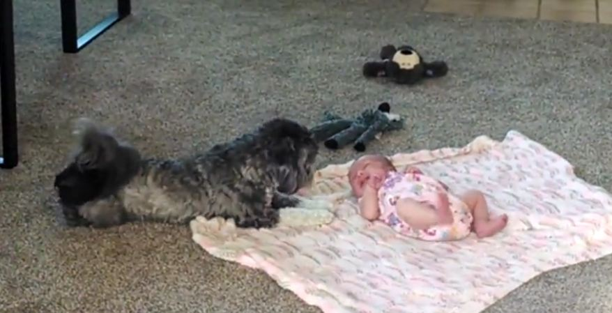 Puppy looks over newborn baby sister