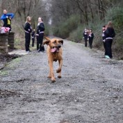 They Let Their Dog Out To Do Its Business, But What It Did Instead Is Hilarious