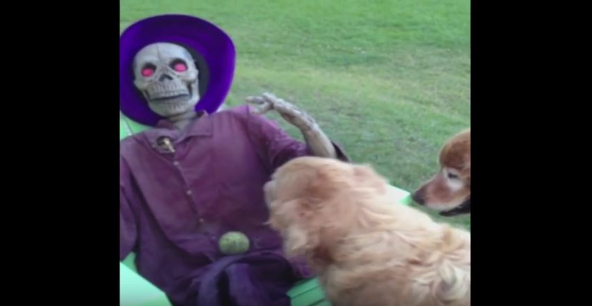 Dog Tries to Play Fetch With Plastic Skeleton