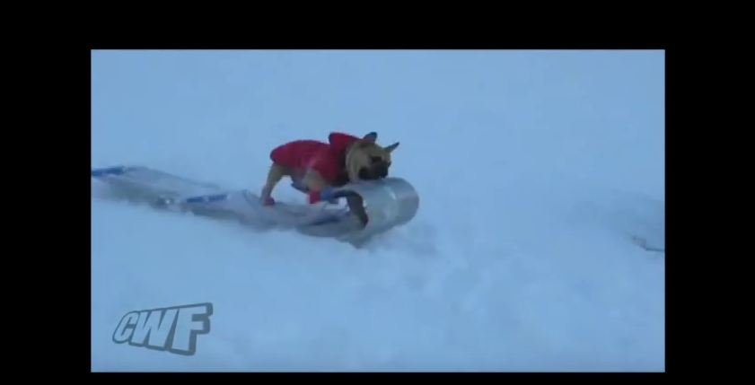 Watch What Happens When This Clever Dog Hijacks A Boy's Sled