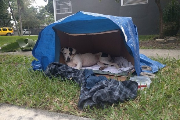 Community Saves Abandoned Dog Waiting for Owners Inside a Box