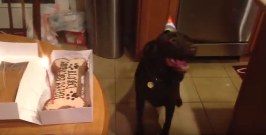 It's This Dog's Birthday And She Is SO Excited. Her Reaction Will Make You LOL.