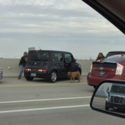 Dog Roaming on Busy Freeway Rescued by Sheriff's Depuity
