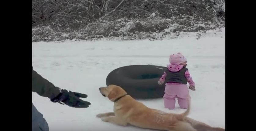 This Dog Doesn't Need A Sled Or Anything To Have Some Fun In The Snow!