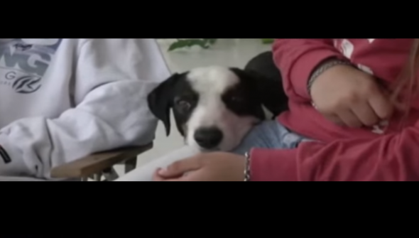 Lonely Dog Makes Hospital His New Home