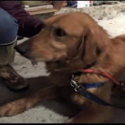 Dog Reunites with Owner after 559 Days On the Run