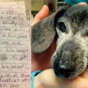 Senior Dog Left with Note to Be Reunited with Owners