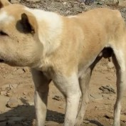 Animal Rescuers Were Shocked When This Stray Dog Walked Up To Them