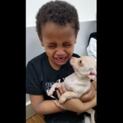 Little Boy Can't Hold Back The Tears After Meeting A Tiny Chihuahua Puppy