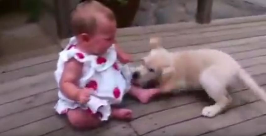 Puppy Is So Excited To Meet Little Girl — Baby Feels The Same