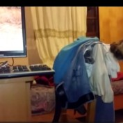 Roaring lion on TV sends dog into barking frenzy